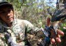Beberapa Burung Ditemukan Mati Ditembak di Hutan Mangrove Wonorejo