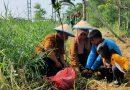 Perjalanan Dari Barat ke Timur Surabaya, Tanam Matoa dan Kelapa Hijau