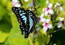 Meningkatkan Keanekaragaman Hayati Sekitar