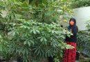 SDN Dukuh Kupang I Ubah Lahan Kosong Menjadi Kebun Sekolah