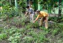 SMPN 51 Ubah Lahan Kosong Menjadi Kebun Mini