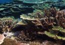 Great Barrier Reef Kehilangan Lebih dari 50 Persen Karangnya